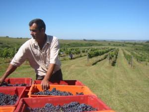 exploitant agricole - vigneron